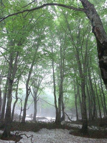 nature_2_3_20090526001120.jpg