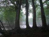 nature_2_4.jpg