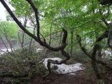 nature_2_8.jpg