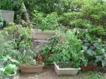 オクラトマトナストウガラシ3種