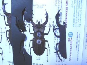 kiri3.jpg