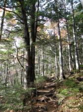 小富士への道