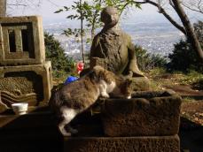 弘法山のネコ