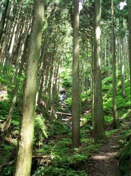 杉並木の道