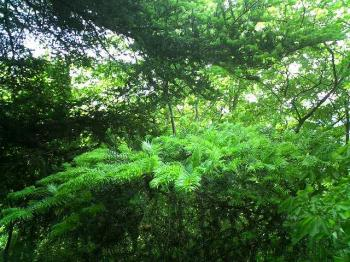 仏果山 新緑