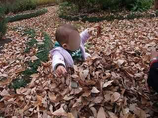 落ち葉遊び