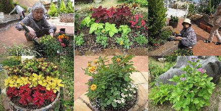夏の苗植え