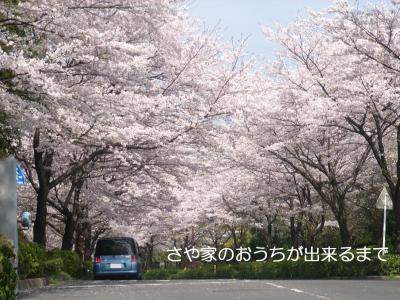 2009-04-08_convert_20090408231559.jpg