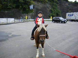 コウ乗馬中