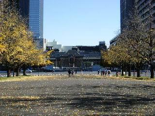 銀杏並木と東京駅
