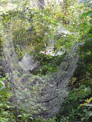 クモの巣02