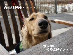 豊洲ランチ1