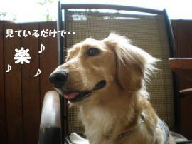20090601-11.jpg