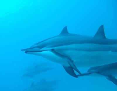 イルカの海へ