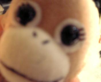 パンジー最高☆