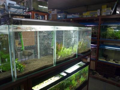 45cmキューブ水草水槽