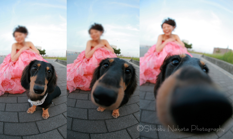 webdog.jpg