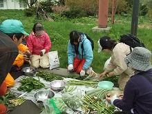 090524山菜料理準備