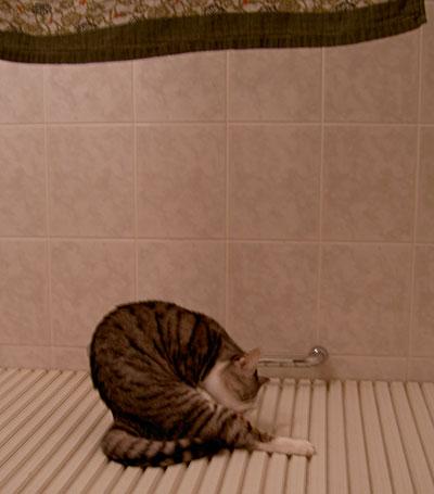 バスルームad1