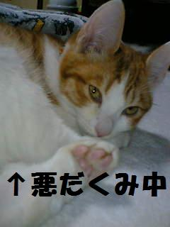 08-01-06_01-40.jpg