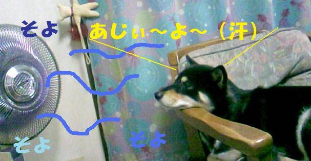 DCF_0008_20080808162602.jpg