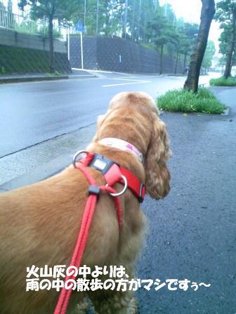 雨の合間の散歩でぇす