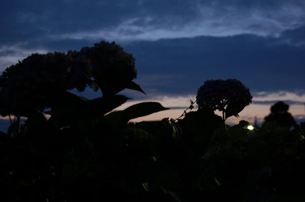 blog20080623.jpg