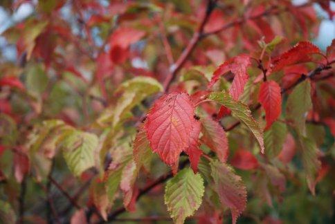 autumn5-2.jpg