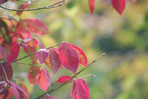 autumn5-3.jpg