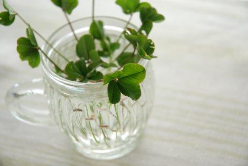 clover5-1.jpg