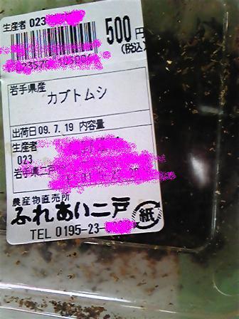 カブトムシ値段