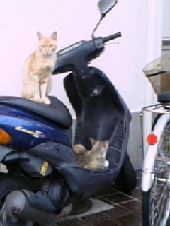 うちのバイクにニャンちゃん