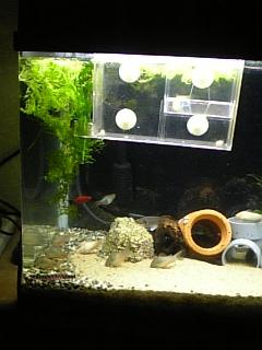 コリの飼育室&産卵箱