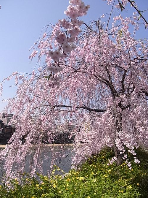 2012_04_12_f.jpg