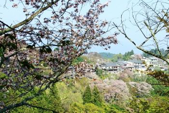 吉野山3_1