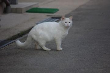 ネコ散歩_1