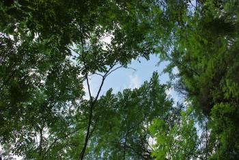 木漏れ日_1
