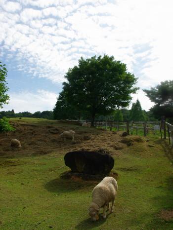羊と羊雲_1