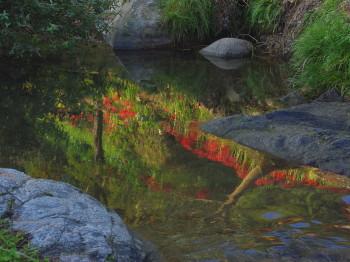 飛鳥川の水面_1