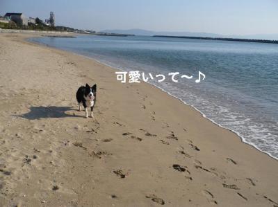 コピー ~ 海8