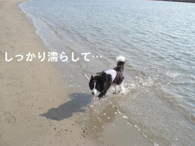 コピー ~ 海12