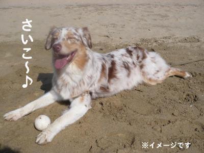 コピー ~ うみ1