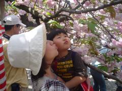 桜に(^з^)-☆Chu!!