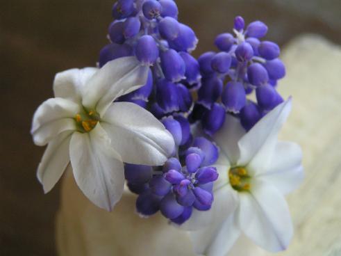 ニラの花とムスカリ