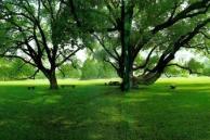 興国賓館・庭園