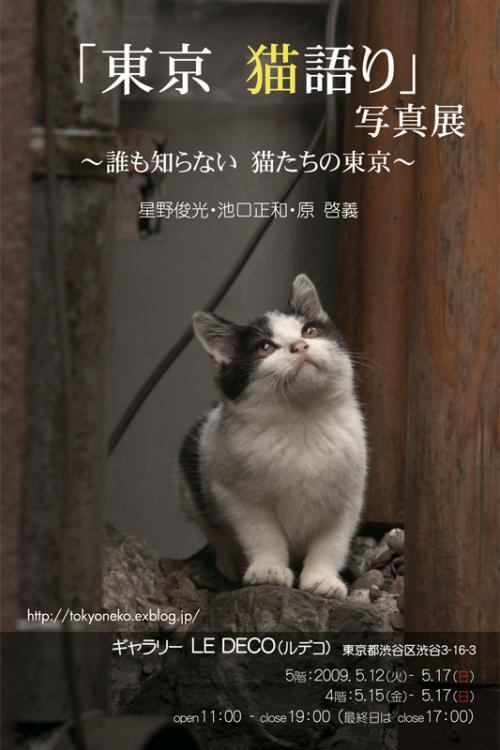 tokyo-nekogatari_convert.jpg