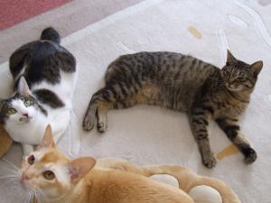 コロンとトラとセナ