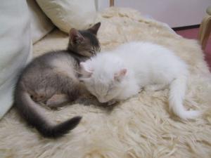 ルカとフー
