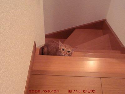 階段トト①