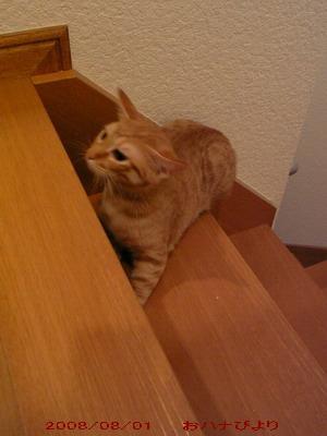 階段トト④
